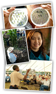 Collage of photos: petri dishes, student, field day, researcher