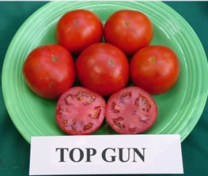 """TOP GUN"" 2007  Rodeo Tomato"