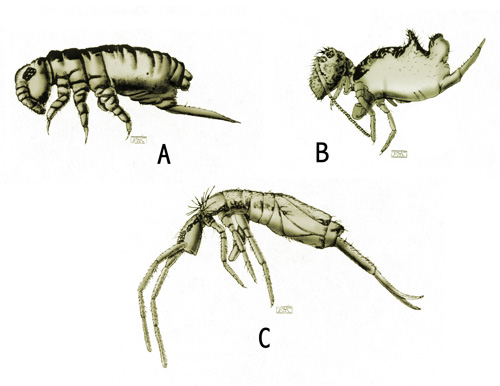 springtail samples-small