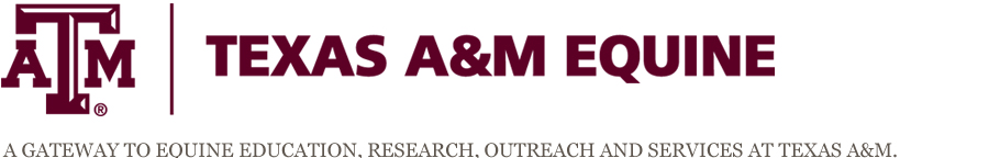 Texas A&M Equine
