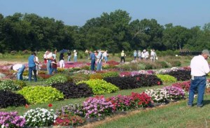A small slice of the 2009 Overton Horticulture Field Day at the North Farm