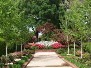 A snapshot of the original planting of the Ina Brundrett Azalea Garden at Tyler Jr. College.