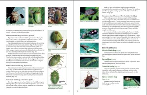 Soybean Guide Pg 17-18