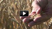 link to AgriLife Solutions Video