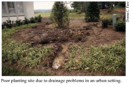Identification of and Corrective Action for Poorly Drained Soils in the  Landscape | Tree Care Kit