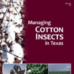 The Texas A&M AgriLife Extension Service's new guide to cotton insect pest management is now available online. (Texas A&M AgriLife Extension Service photo)