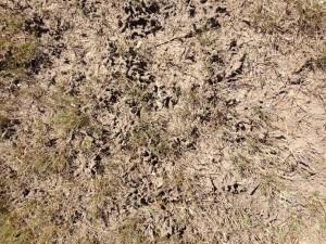 mud tubes- Al Haegelin