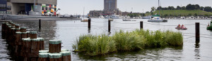 BaltimoreSun-floating-wetlands